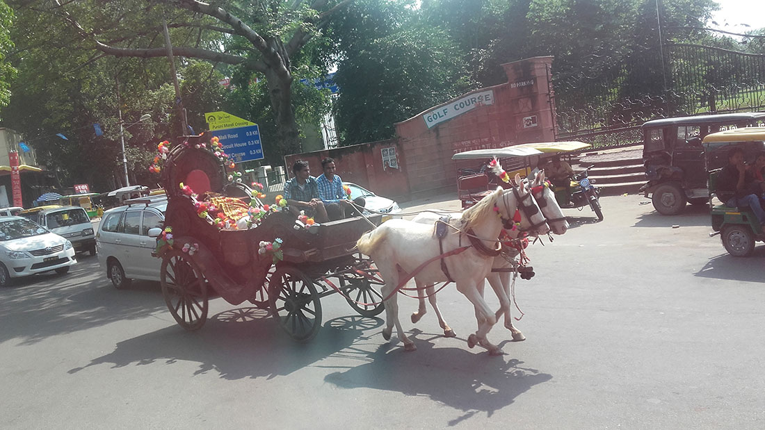 A horse carriage in New Delhi