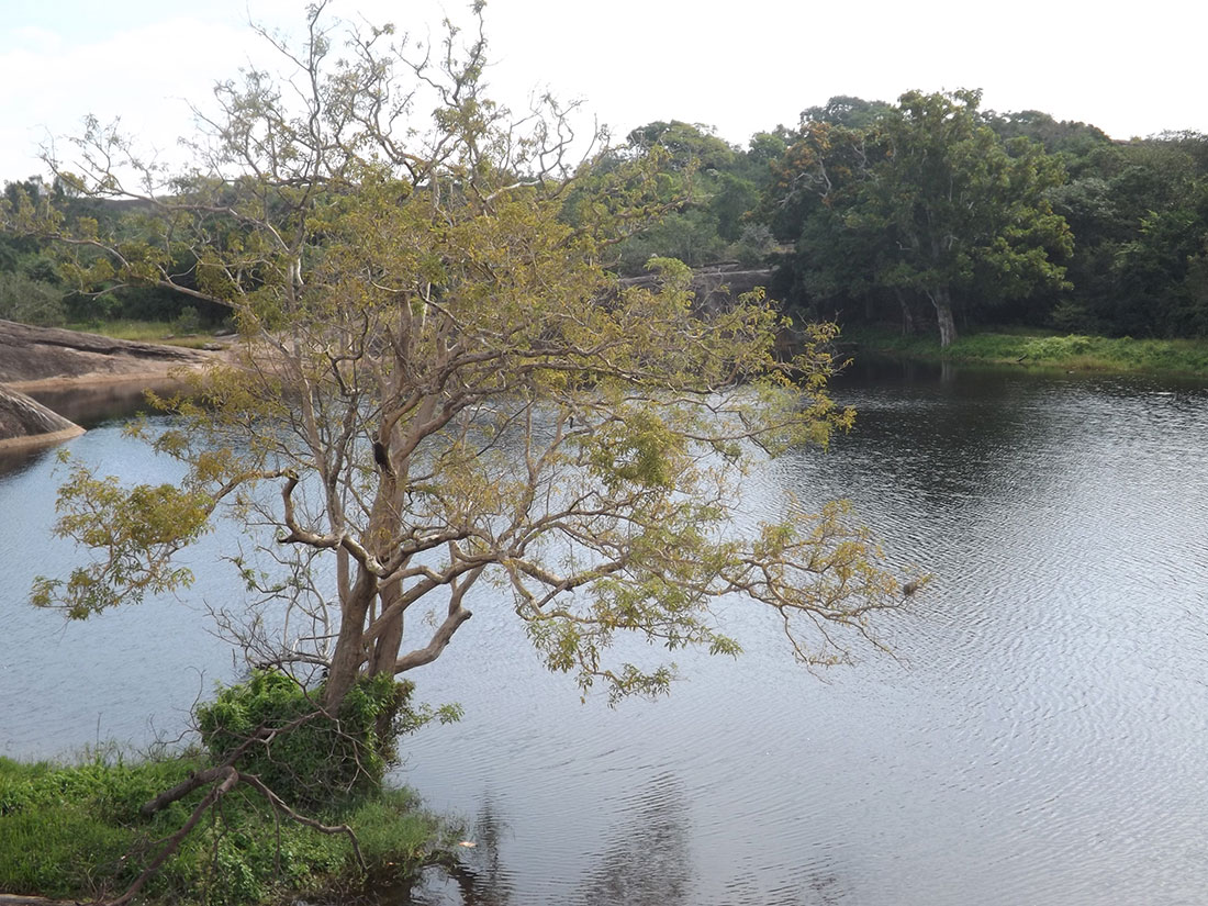Natural pond at Tantirimale, Mahawilachchiya