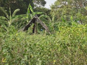 Sanduni's Parents' Farm